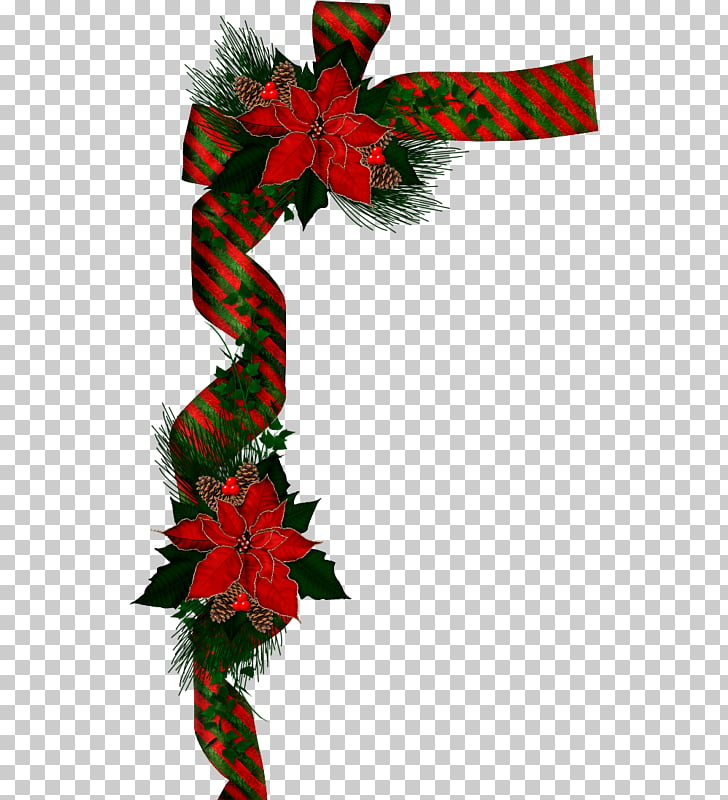 Christmas card Poinsettia Holiday , traditional decoration.
