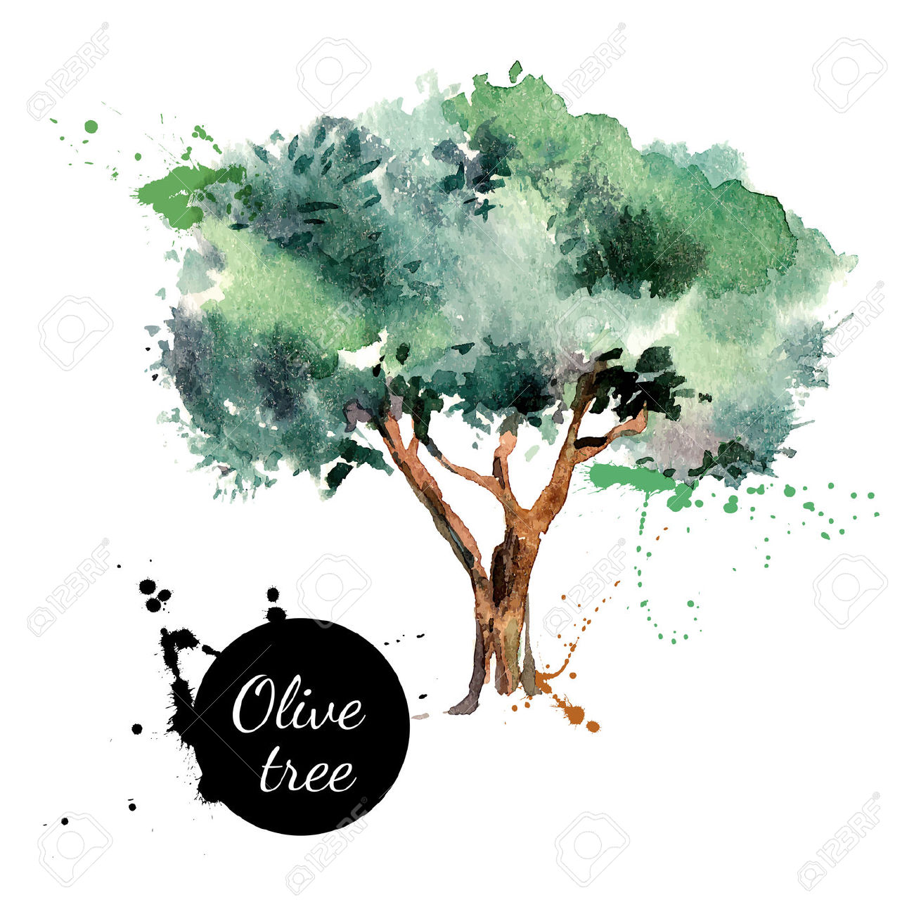 Olive Tree Vector Illustration. Hand Drawn Watercolor Painting.