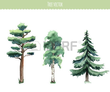 Free Clipart Watercolor Pine Tree.