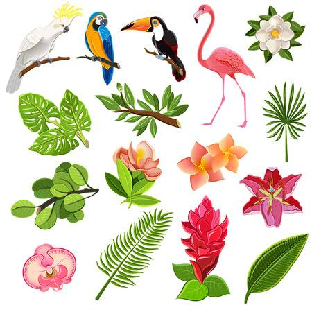 41,397 Tropical Bird Cliparts, Stock Vector And Royalty Free.