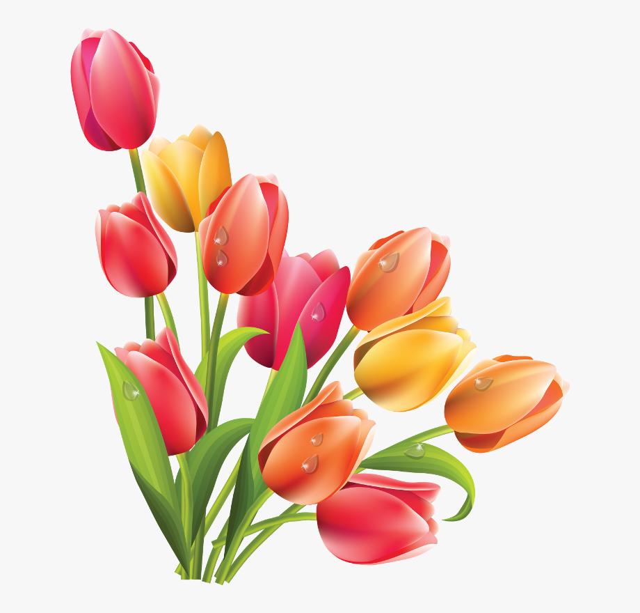 Tulip Clipart 7 Flower.