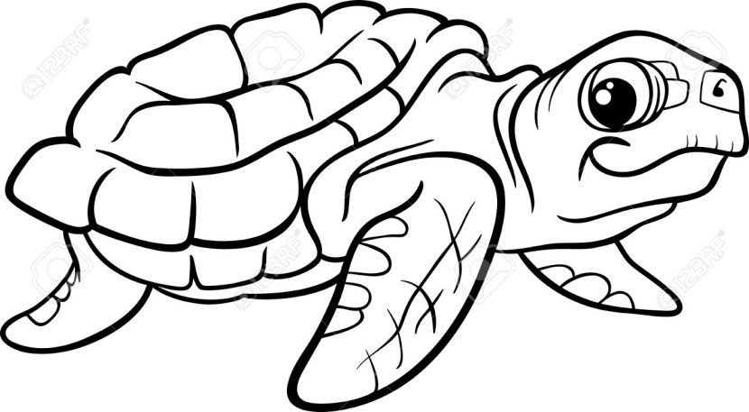 Best Turtle Clipart Black And White #12967.