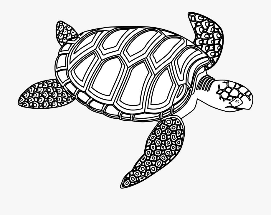 Sea Turtle Clipart Ocean Turtle.