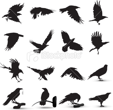 Raven Silhouette Royalty Free Stock Vector Art Illustration.