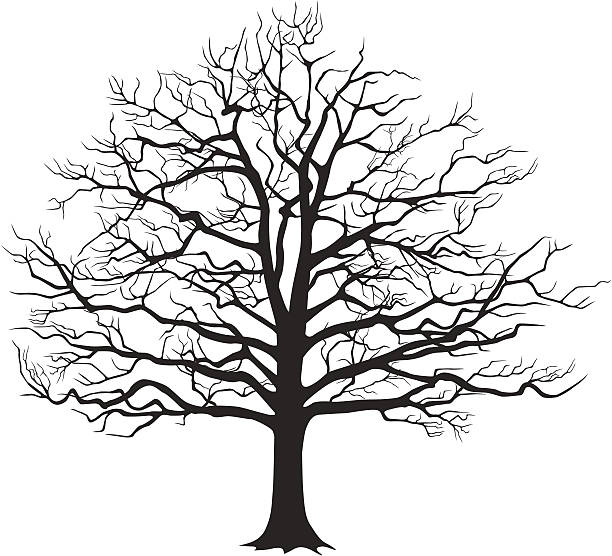 Shade Trees Pictures Clip Art, Vector Images & Illustrations.