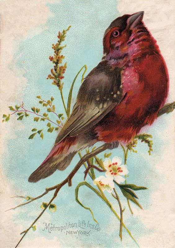 Free Bird Print Cliparts, Download Free Clip Art, Free Clip.