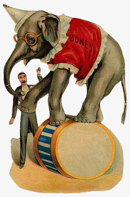 Vintage circus animals PNG clipart.
