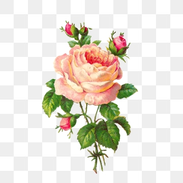 Vintage Rose Png, Vector, PSD, and Clipart With Transparent.