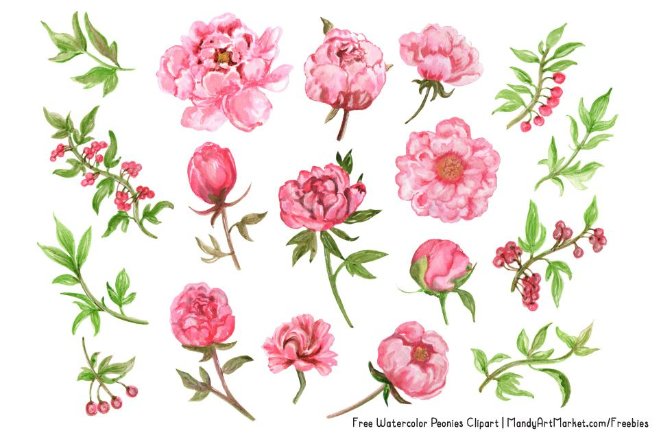 This Free Watercolor Peonies Clipart is the first.