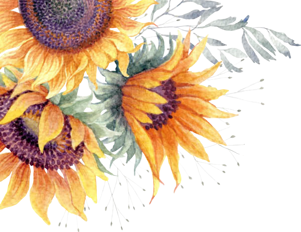 Common sunflower Clip art Image Watercolor painting.