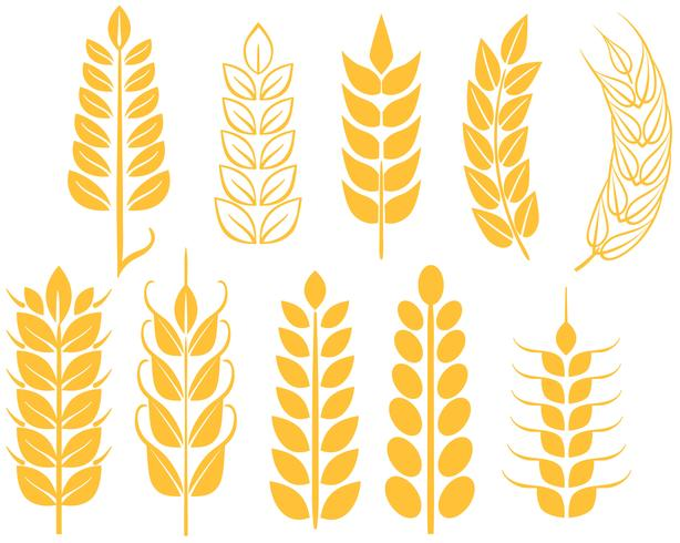 Free Wheat Vectors.