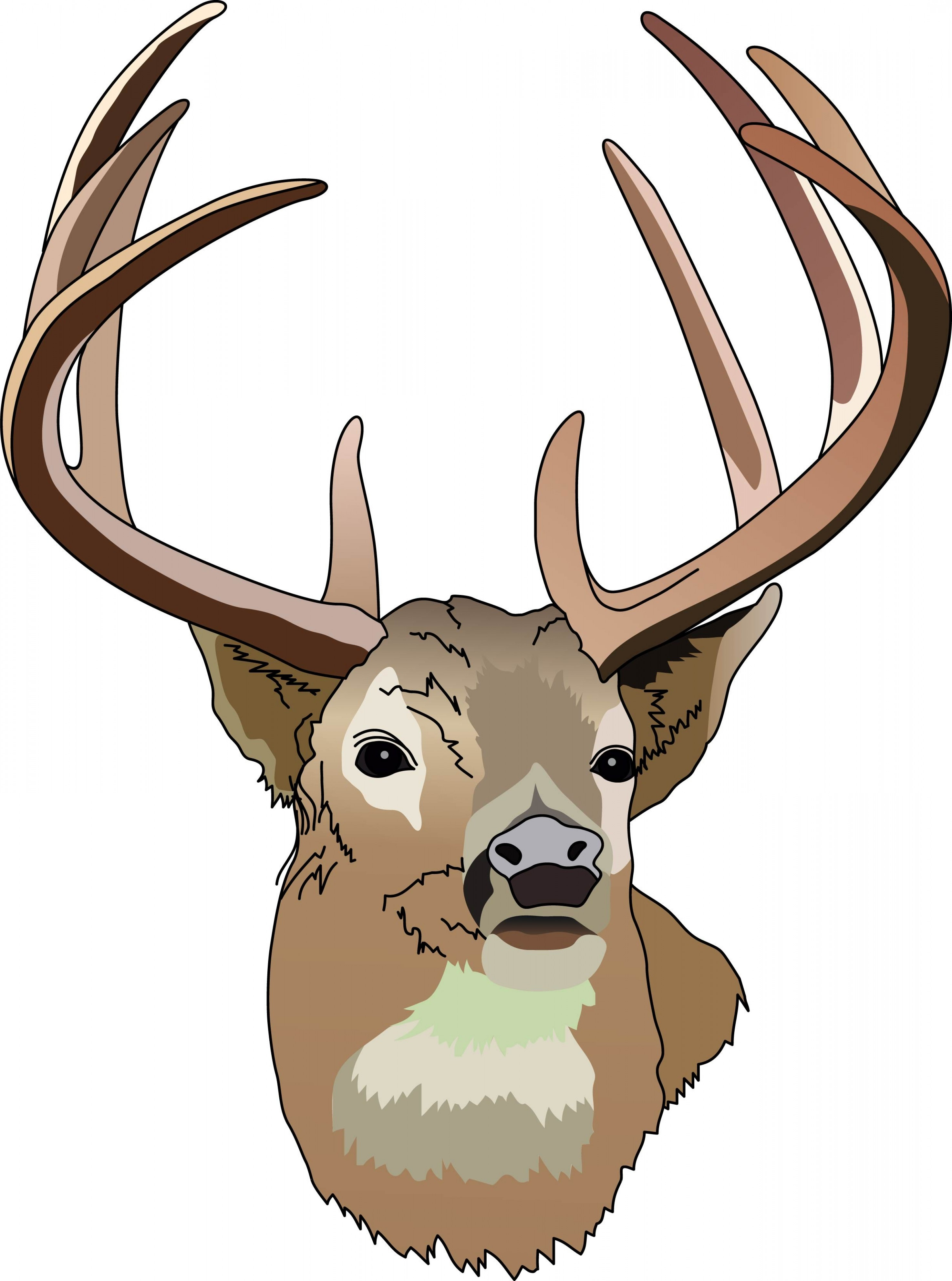 Best White Tail Deer Hunting Vector Image.