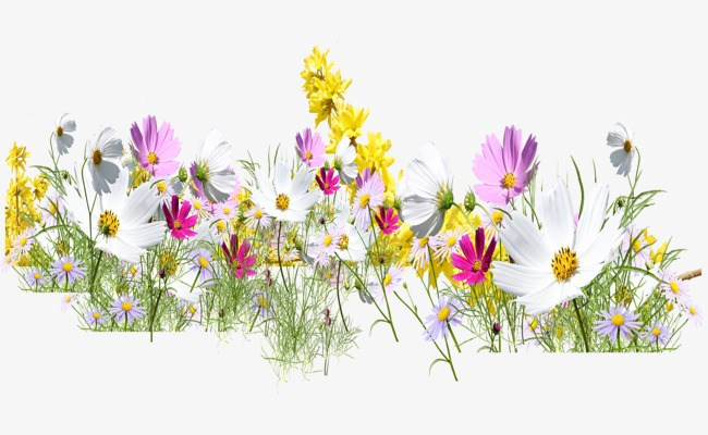 Free wildflower clipart 3 » Clipart Portal.