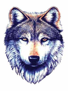 Wolf PNG Images.