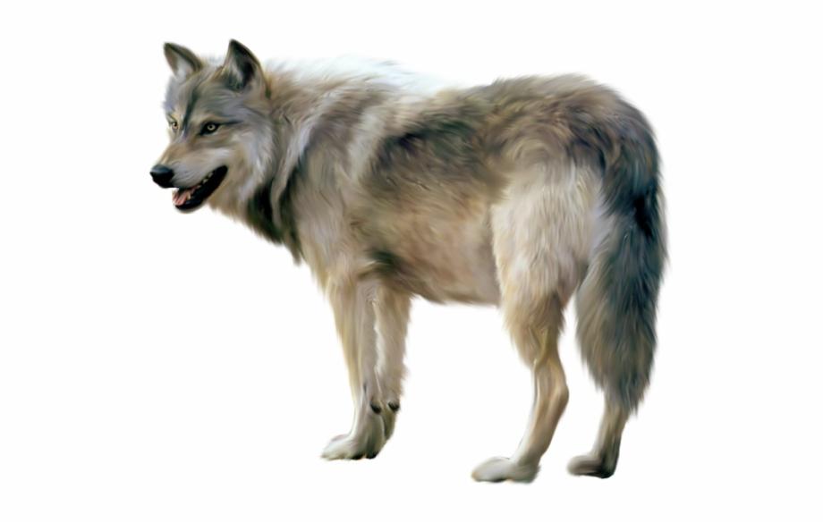 Download Wolf Png Transparent Images Transparent Backgrounds.