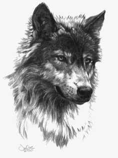 Gray Wolf, Wolf Clipart, Painted Gray Wolf, Cartoon Gray Wolf PNG.