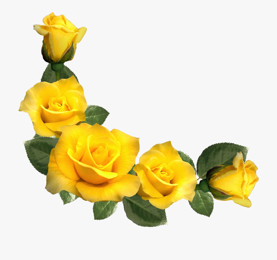 Rose Clipart, Yellow Flowers, Leaf Flowers, Flower.