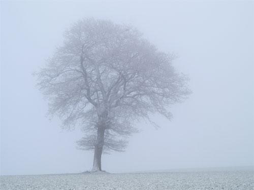 Fog Related Keywords & Suggestions, Long tail keywords.