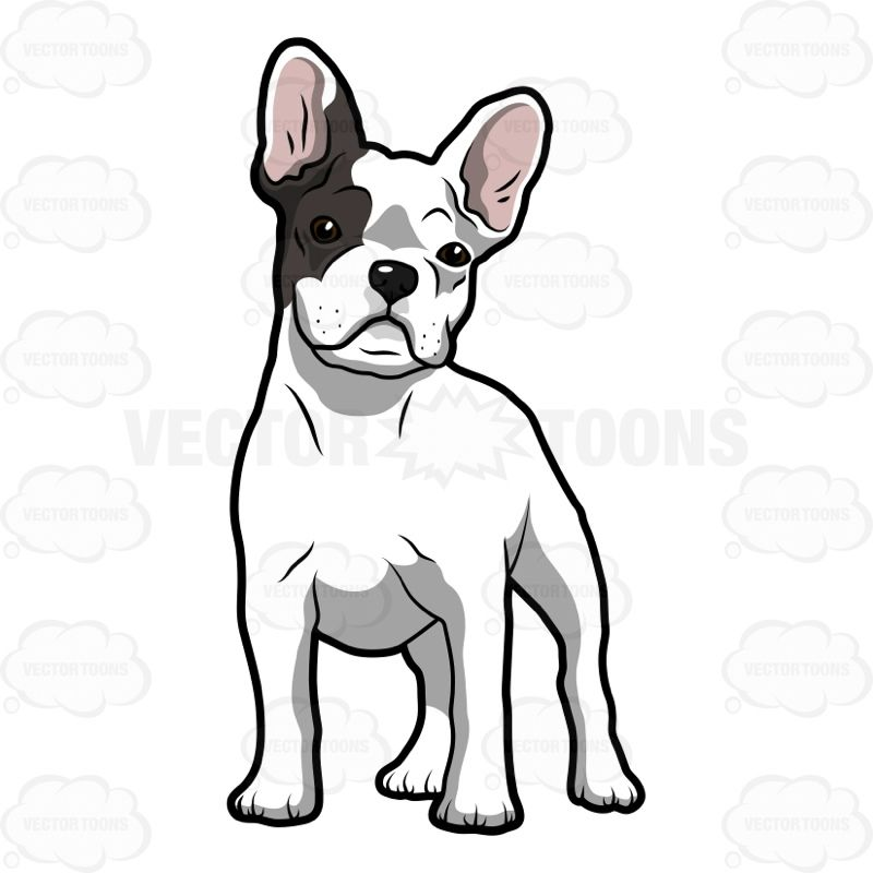Vector cartoon White French Bulldog Puppy With A Patch Of.