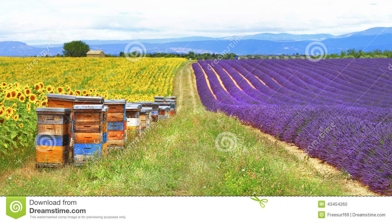 French countryside clipart #16