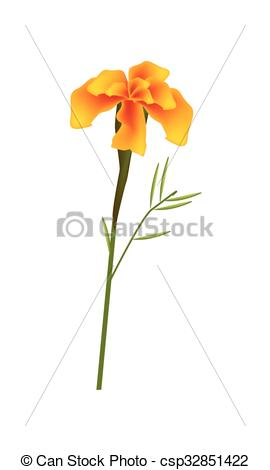 Vector Illustration of Orange French Marigold Flower on White.