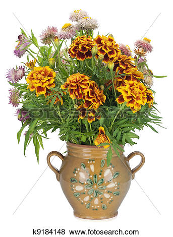 Pictures of French Marigold in jug k9184148.