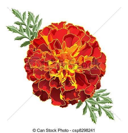 French Marigold Clip Art.