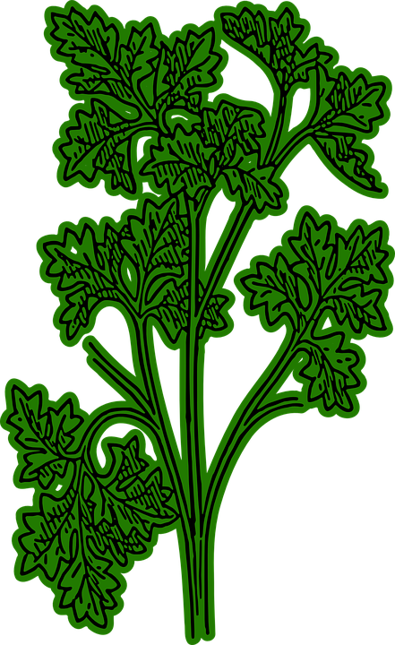 Free vector graphic: Parsley, Green, Spice.