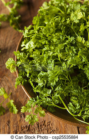 Pictures of Raw Organic French Parsley Chervil on a Background.