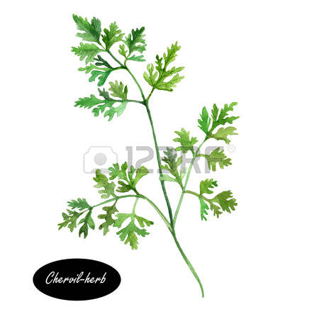 91 Herbes Stock Vector Illustration And Royalty Free Herbes Clipart.