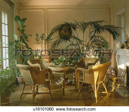 Stock Photography of Cane chairs and lush green houseplants in.