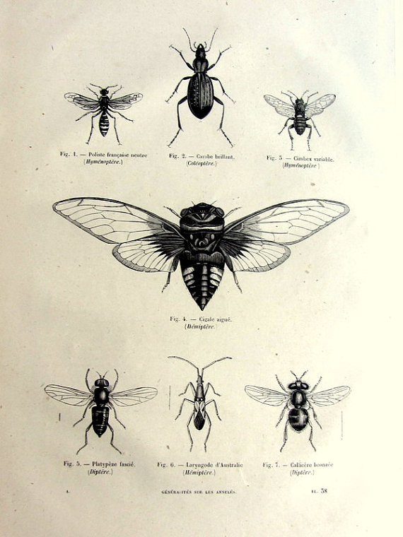 Vintage french insects print, antique original 1860 wasps bees.