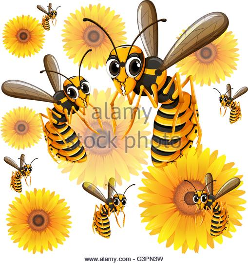 Wasps Flying Stock Photos Images