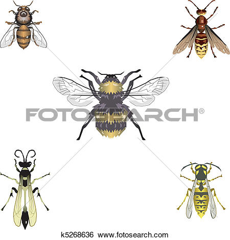 Clip Art of Five vector bees and wasps k5268636.