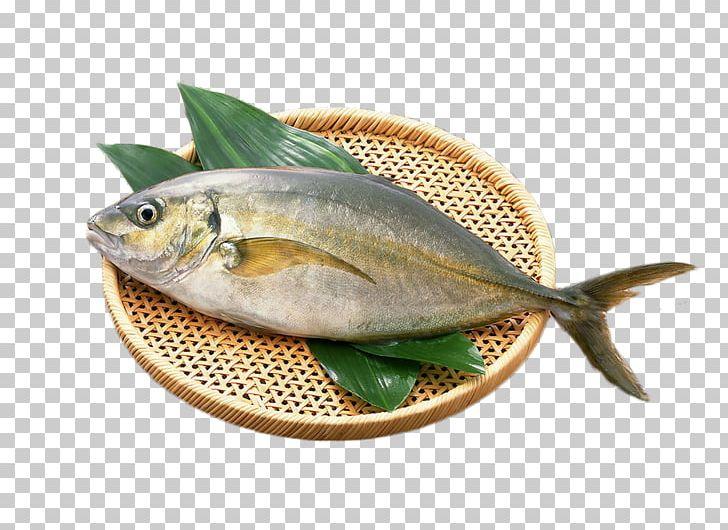 Unagi Seafood Diabetes Mellitus Fish PNG, Clipart, Animals, Animal.