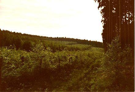 Rabensteiner Wald.