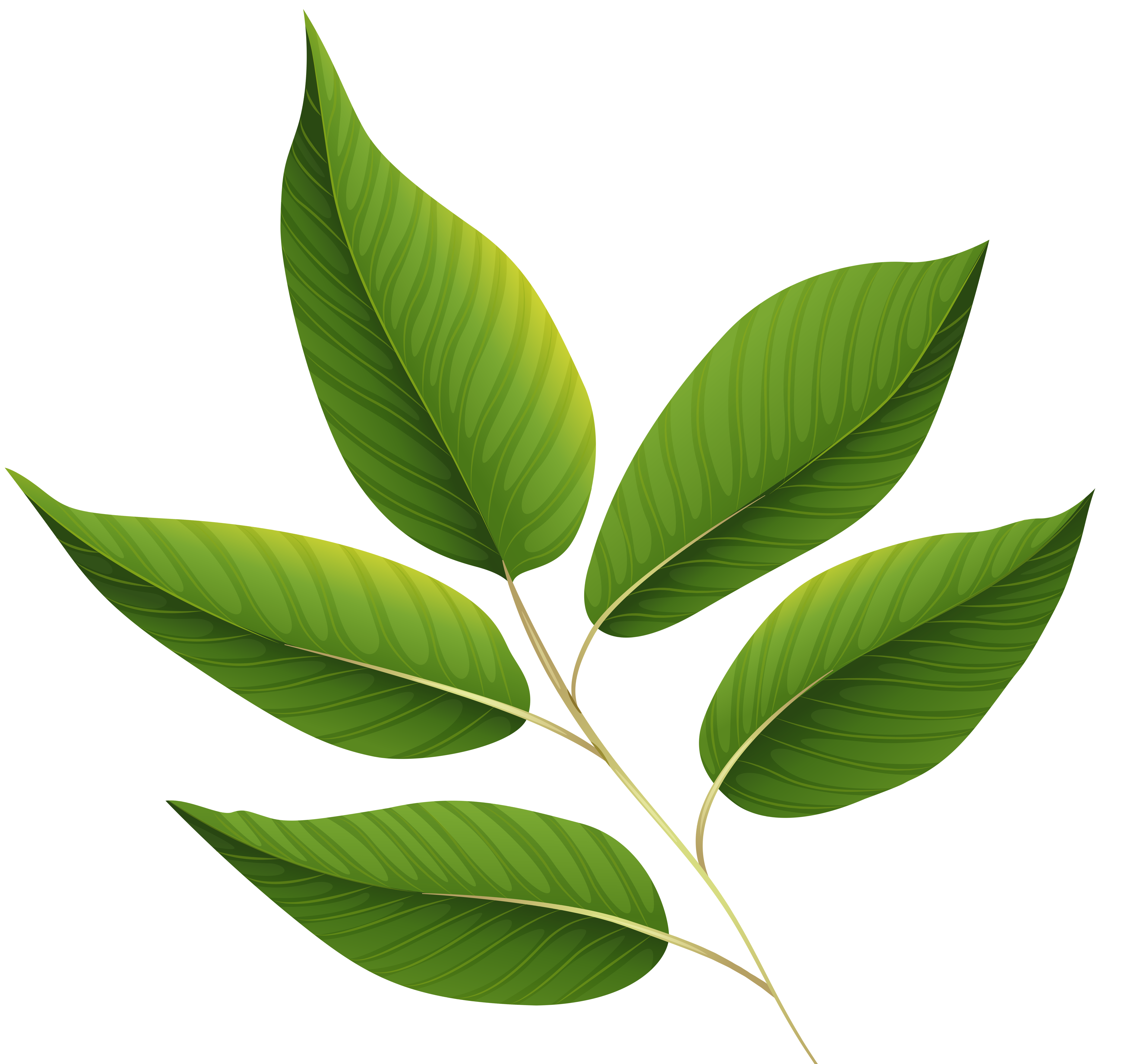 Fresh green leaves clipart png.