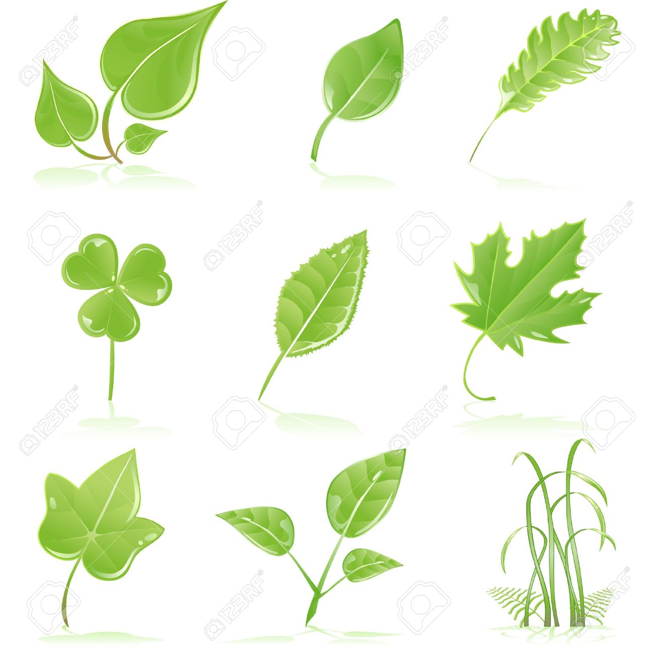 Fresh Green Leaves Clip Art.