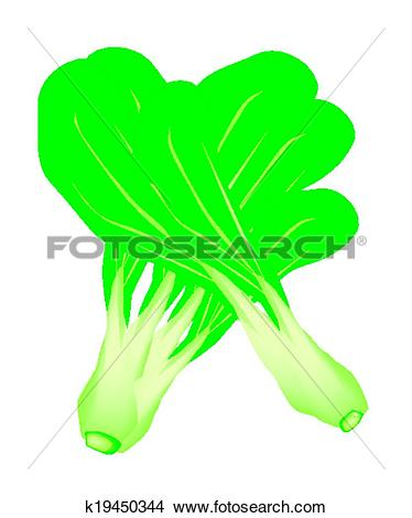 Clipart of Fresh Green Baby Pakchoi on White Background k19450344.