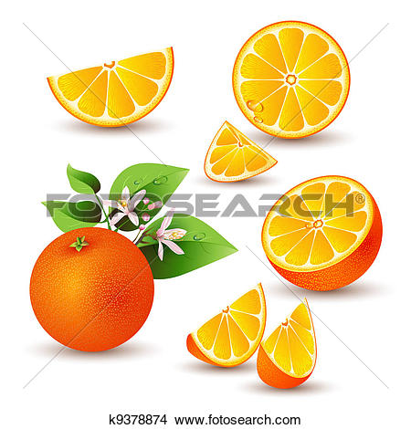 Clipart of Fresh orange with flowers k9378874.