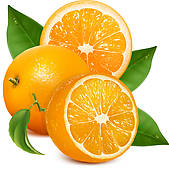 Clip Art of Fresh oranges fruits with green leaves and slices.