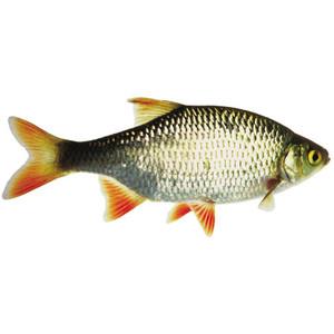 Fresh water fish clipart.