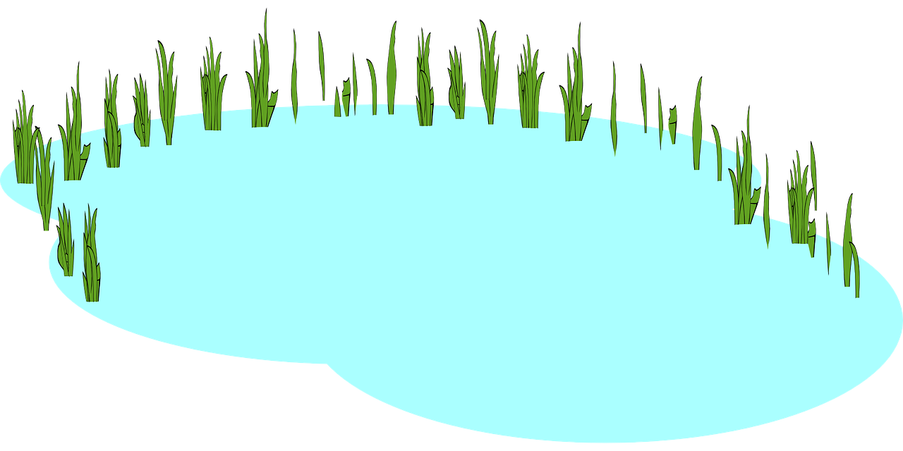 Freshwater clipart.