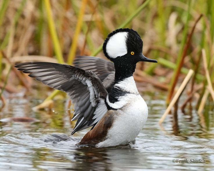 1000+ ideas about Duck Migration on Pinterest.