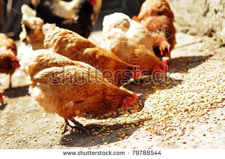Animal meat free stock photos download (5,108 Free stock photos.