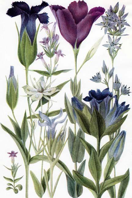 1000+ images about Inspiration Fleurs de Bach on Pinterest.