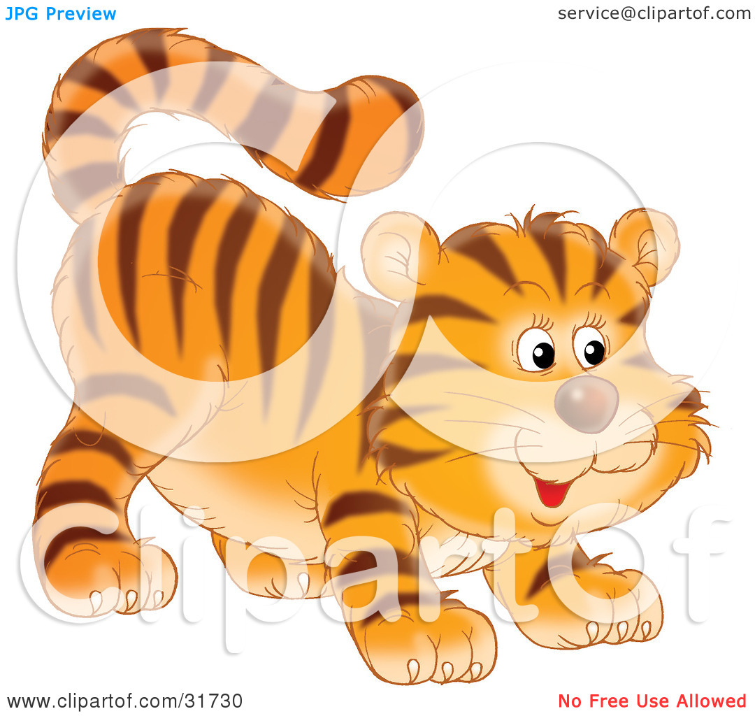 Clipart Illustration of a Frisky Tiger Cub Swishing His Tail And.