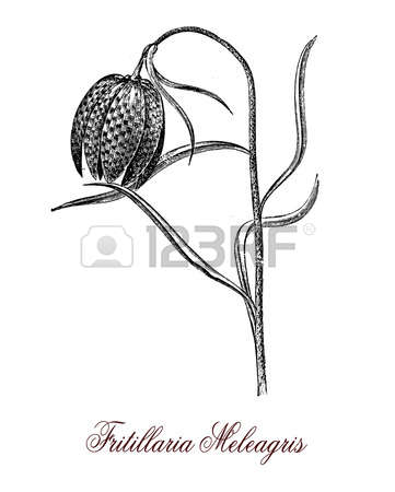 1,485 Poisonous Plant Stock Vector Illustration And Royalty Free.