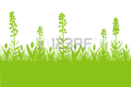 Floral Spring Background With Fritillaria Persica, Tulips And.