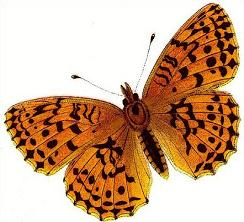 Free Fritillary Butterfly Clipart.